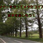 ドライバーのマナー違反を憂慮する、マキノのメタセコイア並木
