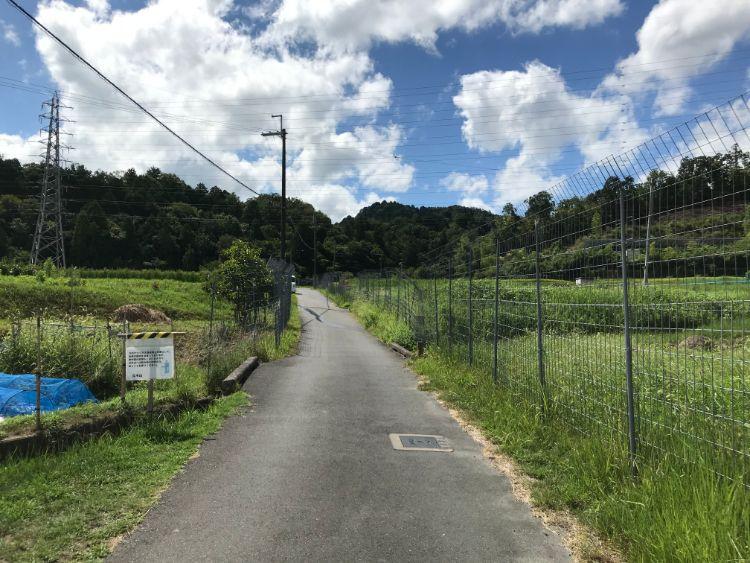 立木観音参道の周りが田んぼの箇所