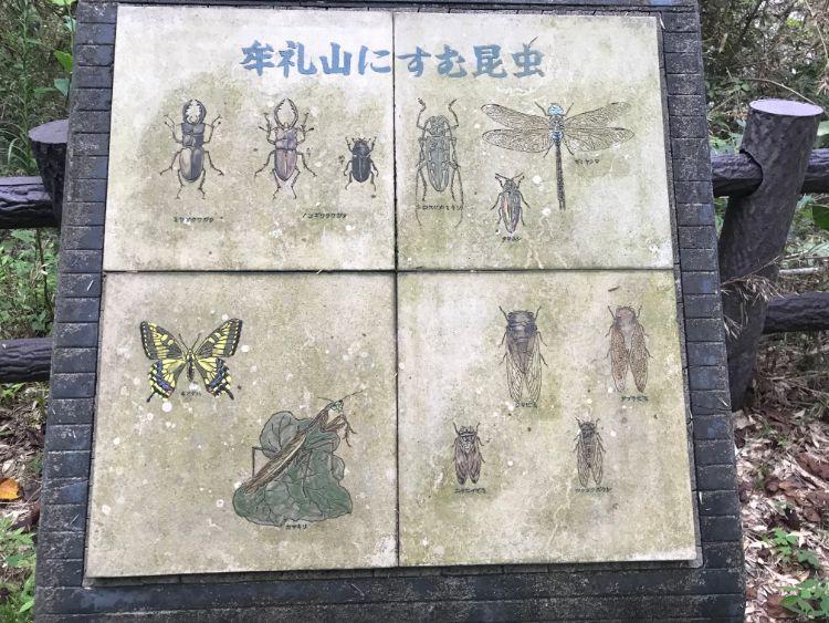 牟礼山に住む昆虫