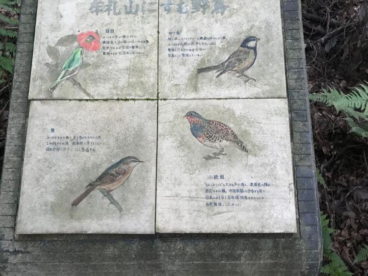 牟礼山に住む野鳥