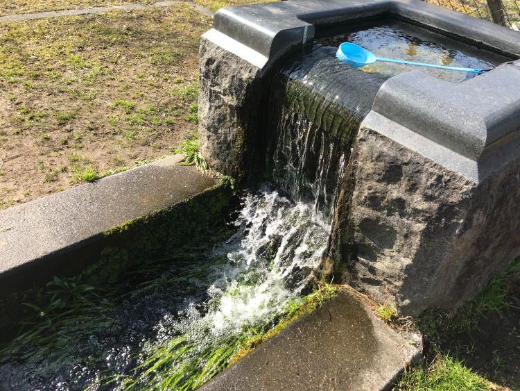 金森湧水公園の湧き水