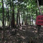 石山寺が麓にある、滋賀県の伽藍山を登山してきた。