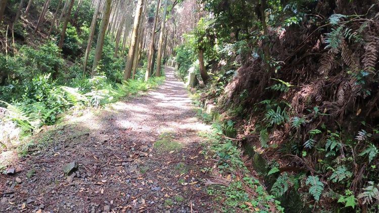 伽藍山歩道の急な勾配