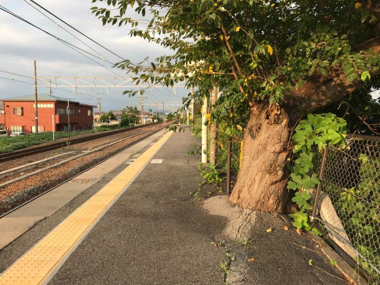 稲枝駅内の木